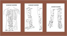 Acupuncture meridian points with reference to the body map Free ...