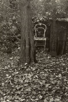A Walk in the Magic Garden, Josef Sudek.