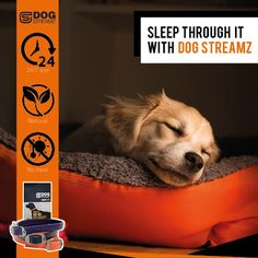 DOG StreamZ® unique dog collars introduce a new magnetic technology for dogs - ideal for all dogs of any age. Non invasive process creating no heat. Suitable for use. Endorsed by champions. Cat Care Tips, Dog Care, Dog Kennel Designs, Unique Dog Collars, Dog Playground, Pumpkin Dog Treats, Dog Agility, Healthy Dog Treats, Homemade Dog