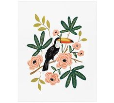Toucan by Rifle Paper Co.