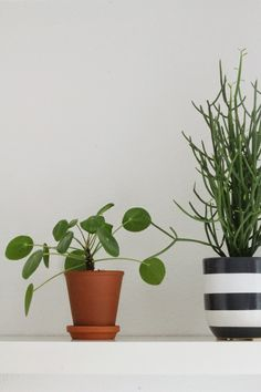 Pilea Peperomioides (Chinese Money Plant) Interior | Keep it simple | some moments are golden.