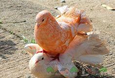 Pigeon Cage, Pink Pigeon, Baby Girl Images, Interesting Animals, Creatures, Birds, Manga, Amazing, Animales