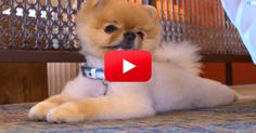 OMG! What Jiff Can Do Will Blow Your Mind! | The Animal Rescue Site Blog