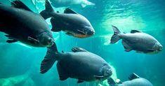 AQUATIS Aquarium-Vivarium de Lausanne a accueilli son 100 000ème visiteur!