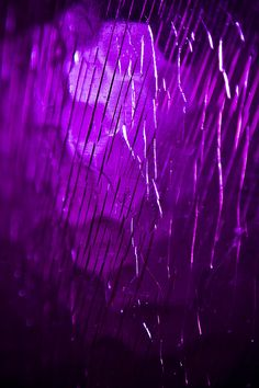 "Macro Mondays ""The Color Purple"" posted at flickr by matthewdale"