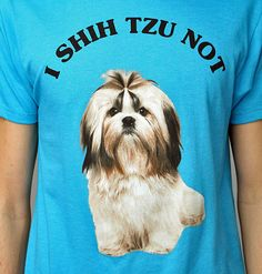 Just because of the fact that Angel is a Shih Tzu... ;D
