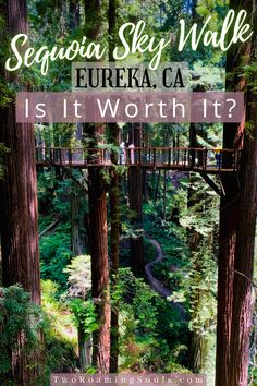 This new sky walk in Eureka, CA is the hot new adventure. It's located in the Sequoia Zoo above the Sequoia Park with beautiful views amongst Rewood Trees. #SequoiaZoo #SkyWalk #EurekaCalifornia #NorthernCalifornia #Adventure