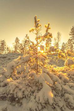 Beautiful Winter Photography - 16