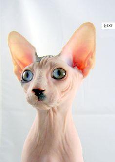 I met his brother today.    Amazing Hitler Split-Eye Cat.