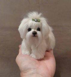 Gemma the tiny Maltese Puppy Needle Felted Animals, Felt Animals, Needle Felting, Cute Puppies, Cute Dogs, Crochet Dog Patterns, Miniature Dogs, Felt Dogs, Cute Little Animals