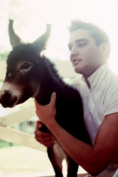 vintage photos Elvis with his little friend at Graceland on Monday, June He had just completed basic training at Fort Hood, TX and was on a two-week leave. Elvis, not the little burro! Elvis Presley Graceland, Baby Donkey, Cute Donkey, Mini Donkey, Baby Cows, Baby Elephants, Animals And Pets, Baby Animals, Cute Animals
