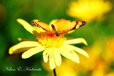 Turismo rural  em Colonia Mergulhão - São José Dos Pinhais - Pr  (Flores, borboleta)