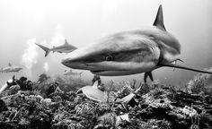 Dieser Künstler schießt beeindruckende Schwarzweiß-Fotos von Haien, Walen und Delfinen   WIRED Germany
