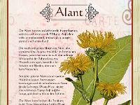 Alant