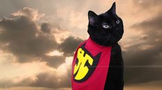 I am the super meow! I am going to save the world | Meow2Meow