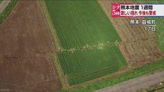 Disso Voce Sabia?: TERREMOTO FAZ TERRA SE MOVER AO LONGO DE 80 KM NO JAPÃO; FORAM MAIS DE 700 TREMORES APENAS NA ÚLTIMA SEMANA