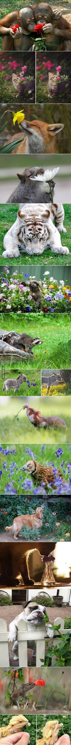 Animals smelling flowers