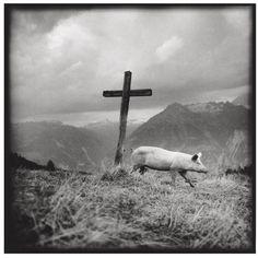 Romano Riedo From Alpzeit Wind Turbine, Magic, Mountains, Black And White, Portrait, Nature, Travel, Animals, Pandora