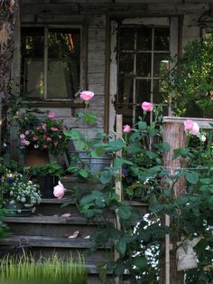 I dream of having a quaint little cottage away from the city where I can enjoy the quiet of nature. Witch Cottage, Cottage In The Woods, Witch House, Cozy Cottage, Cottage Style, Garden Cottage, Porches, Potting Sheds, Room To Grow
