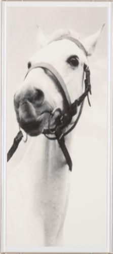 George Chinery Horse 1 | Natural Curiosities Art: 20in. × 48in. Framed: 22in. × 50in.