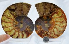 5369x Cut Split PAIR Ammonite Deep Crystal by Paulstaberminerals