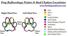 Young Living Essential Oils: Dog Reflexology Looking for more oily info? Find me here www.fb.com/essentialliving180