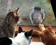 3 cats 1 bird.  Do you think he sees us?