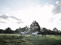 Discover Gympie: the Sunshine Coast's unknown hideaway - Australian Traveller