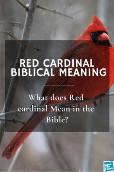 Red Cardinal Biblical Meaning: What does Red cardinal Mean in the Bible? - what does red cardinal actually mean according to bible? What does the bible say about this red car - Cardinal Birds Meaning, Bird Meaning, Small Cardinal Tattoo, Red Cardinal Tattoos, Red Bird Tattoos, Estrella Cardinal, Birthday Poems, Meant To Be Quotes, Cool Ideas