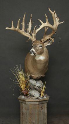 Deer Hunting Decor, Whitetail Deer Hunting, Deer Camp, Whitetail Bucks, World Of Interiors, Deer Mount Decor, Whitetail Deer Pictures, Taxidermy Decor, Deer Mounts