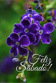 Feliz Sábado / Feliz Día / Sábado / Saturday / Happy Saturday / Happy Day / Que pases un lindo día / Buenos Días / Good Morning / Happy Weekend / Feliz Fin de Semana / Fin de Semana / Weekend