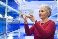 Christiane Nüsslein-Volhard es una genetista que pasó muchos años estudiando el desarrollo embrionario de la mosca de la fruta Drosophila melanogaster. Esto dio lugar a una base de datos de las mutaciones en Drosophila y ayudó a explicar cómo un embrión de una sola célula, ya sea una mosca o humano, se acaba convirtiendo en un complejo animal. Nüsslein-Volhard recibió el Premio Nobel de Fisiología o Medicina en 1995.