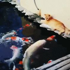 Strange reaction of a cat to a fish