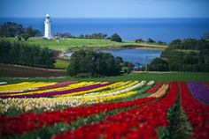 The Tulip Festival at Table Cape, Tasmania, Australia is not far away - such a stunning and awesome sight. Photograph by Scott Sporleder. Beautiful Places To Visit, Great Places, Places To Go, Amazing Places, World Of Wanderlust, Long Island Ny, Big Island, Tulip Fields, Holiday Places