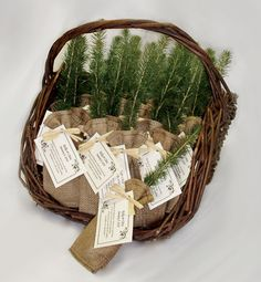 Plantable tree sapling wedding favor, as seen on The Pink Bride blog www.thepinkbride.com || {Five Unique Wedding Favors Guests Will Love}