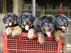I'd fill a shopping basket with these cuties and bring them home!!
