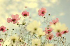 All'ombra dei fiori nessuno è straniero. -- KOBAYASHI ISSA