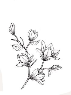Untitled - Estás en el lugar correcto para receita batata Aquí presentamos sopas receita que está buscando - Flower Line Drawings, Flower Sketches, Art Sketches, Flower Outline, Flower Art, Botanical Art, Botanical Illustration, Easy Drawings, Pencil Drawings