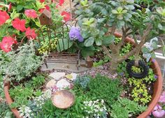 Love the LARGE FLAT rock anchoring the bench & watering can with a couple of other stones as a path and then ting TUFTS of plantings with the copper BIRD BATH... really cute concept...