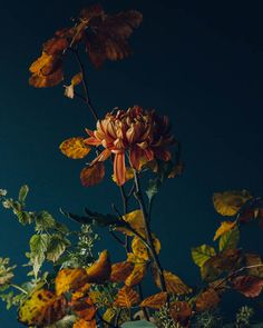 Giving Thanks + Autumn Flowers by Swallows & Damsons | Design*Sponge