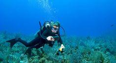 Plongeuse dans la zone de la réserve Cousteau aux îlets Pigeons à Malendure, commune de Bouillante