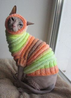Cat clothes sphynx clothes clothes for sphynx sphynx sweater sweater for sphynx cat sweater warm cat sweater pet clothes sphynx cat I Love Cats, Crazy Cats, Cool Cats, Sphynx Cat Clothes, Pet Clothes, Age Chat, Cute Hairless Cat, Chat Sphynx, Baby Animals