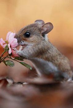 Cute Wild Animals, Cute Little Animals, Funny Animals, Nature Animals, Animals And Pets, Beautiful Creatures, Animals Beautiful, Animal Antics, Cute Mouse
