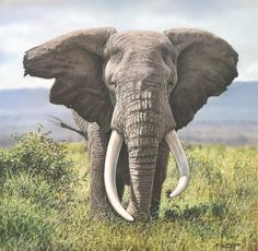 pastel painting of an African Elephant, a big tusker by wildlife artist Eric Wilson.
