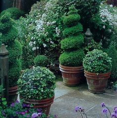 I ♥ topiary planters ....ditto!!!!- me too