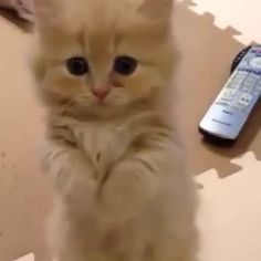 Will you play with me please?