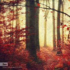 blood on the forest floor by dyrkwyst  Wuppertal Atmosphäre Bergisches Land Buchen Buchenwald Bäume Büsche Deutschland Dunst Gegenlicht Ger