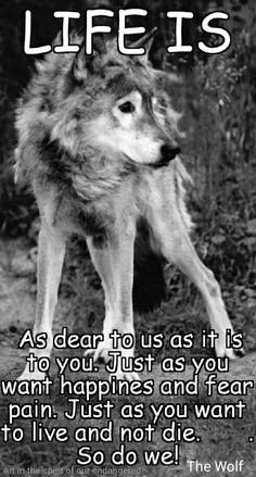 """My Pack of Wolves on Twitter: """"https://t.co/5PEoaxT55U"""""""