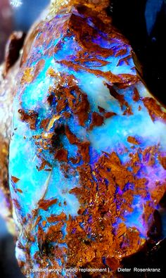 opalized wood [wood replacement]