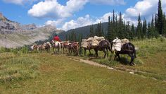 Wilderness horse pack trips in Montana's spectacular Bob Marshall Wilderness between Glacier and Yellowstone National Parks.
